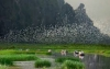 First national wildlife park to be built in Ninh Binh